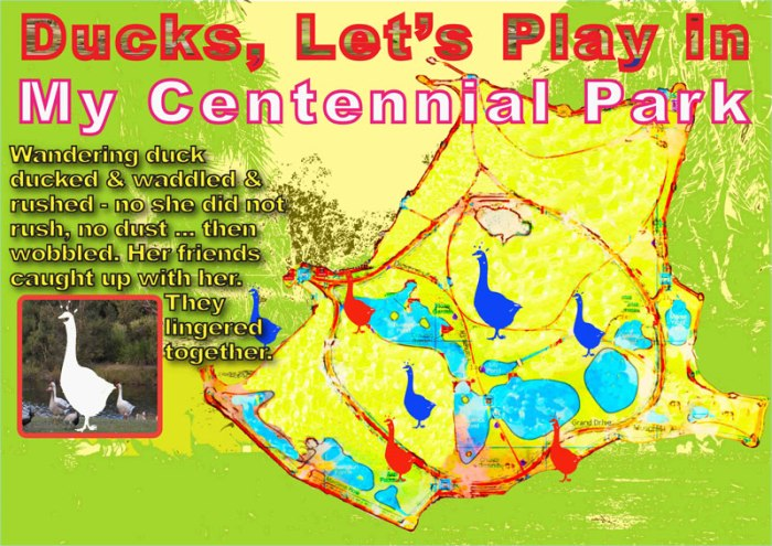 A-Ducks,-Let's-Play-in-My-Centennial-Park